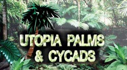 utopia palms and cycads logo